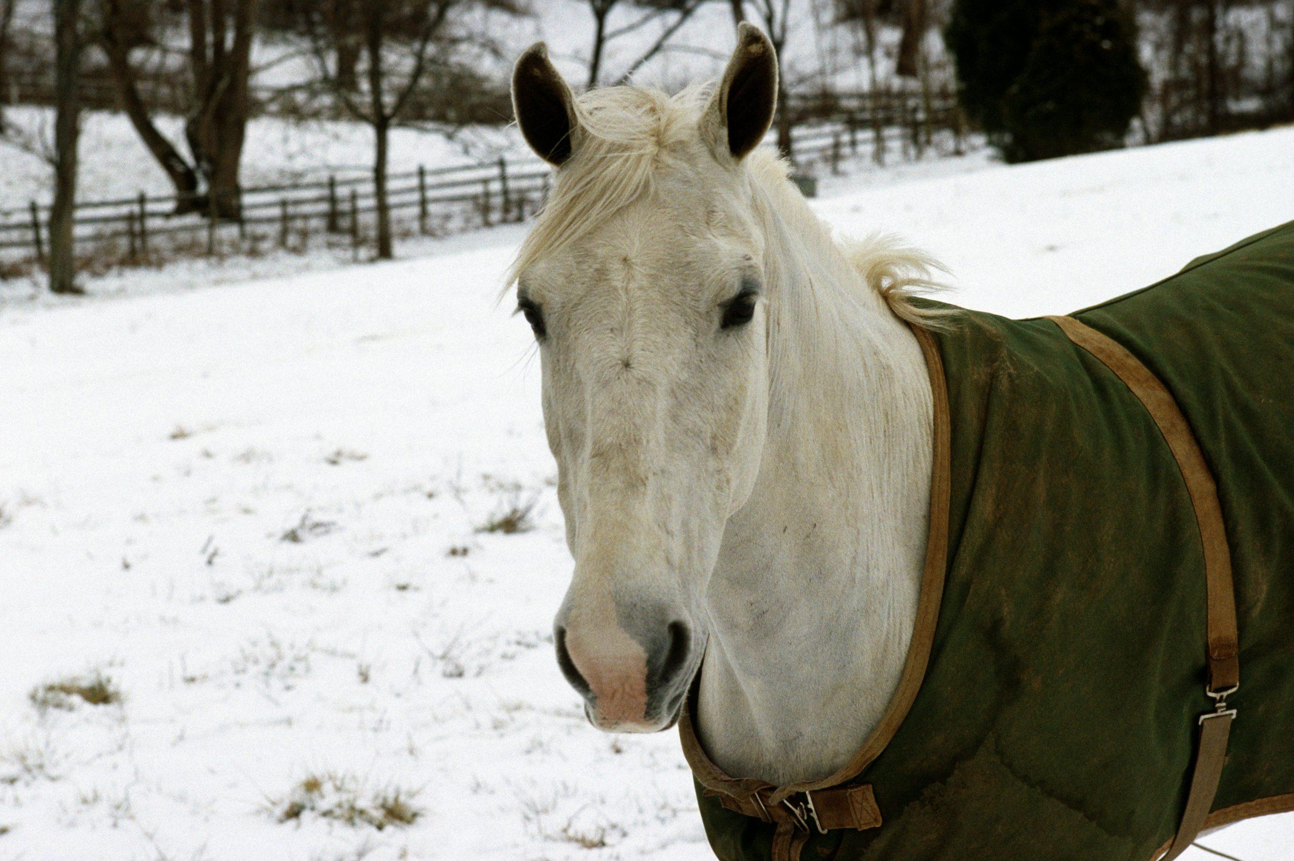Agostino von Hassell: War Horse Heaven